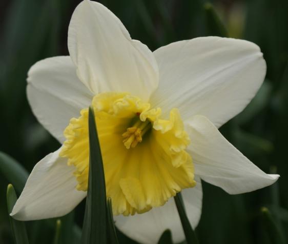 4 Spring